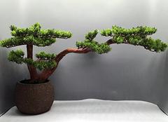 客厅里放什么植物招财 客厅摆放植物的风水禁忌