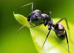 家里招蚂蚁预示着什么 家里有蚂蚁怎么治