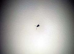 蟑螂爬到床上�能睡��� 家�Y有蟑螂怎麽治