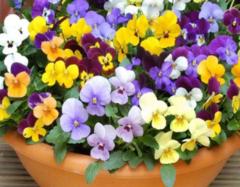 适合家里养的18种花 家里千万不能养的6种花