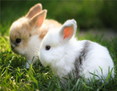 属兔的和什么属相最配 属兔的几月出生最好 属兔的属相婚配表大全