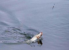梦见钓鱼是什么意思 梦见钓鱼一钓就上钩 梦见钓鱼钓到大鱼