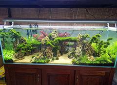 生态鱼缸怎么打理 生态鱼缸多久换一次水 生态鱼缸养什么鱼最好