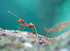 被蚂蚁咬了会怎么样 被蚂蚁咬了有什么症状 被蚂蚁咬了怎么止痒消肿