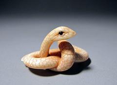 做梦梦见很多蛇是什么意思 做梦被蛇追是什么预兆 晚上做梦梦见蛇好不好