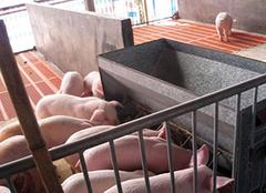 2万月薪招聘养猪怎么回事 2万月薪招聘养猪是真的假的 2万月薪招聘养猪需要什么条件