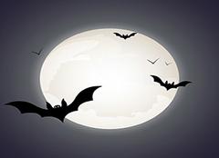 蝙蝠飞进屋里是吉是凶 蝙蝠飞进家里预示什么 蝙蝠入屋是不吉利的