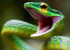梦到蛇预示着什么 梦到很多蛇预示着什么 女人梦见蛇好吗
