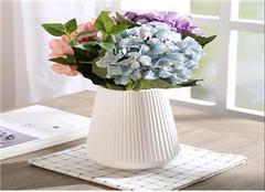 什么花适合放在卧室 卧室放什么花有助睡眠 卧室放什么花最好健康