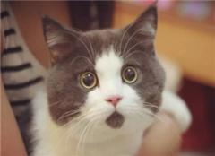猫咪恨主人的十种表现 猫咪讨厌主人的反应 猫咪讨厌你的表现