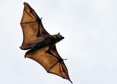 蝙蝠��w�M家�Y�A示什麽意思 蝙蝠�w〗�M家�Y怎麽�s走 蝙蝠�w�M■家�Y要用什麽消毒