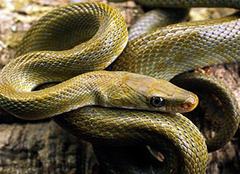 孕妇梦见蛇是什么意思 孕妇梦见蛇生男生女 孕妇梦见蛇咬自己