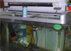 鱼缸过滤器哪种好 鱼缸过滤器要一直开着吗 鱼缸过滤器怎么清洗