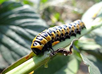 梦见虫子是什么意思 女人梦见虫子什么预兆 梦见白色蠕动的虫子