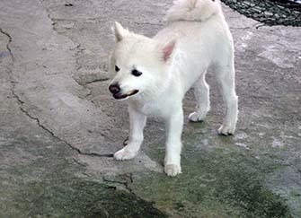 狐�犬和博↑美的�^�e 狐�犬多少�X一只 狐��犬催眠是真的��
