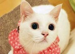 什么颜色的猫不能养 什么颜色的猫最旺财 养猫颜色有什么讲究