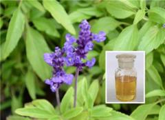 鼠尾草精油的功效与作用 鼠尾草精油怎么使用 鼠尾草精油使用完要洗吗