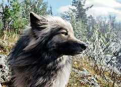 霸�狻钦胸�的狗名字 聚�的狗名ξ 字 最洋�獾墓访�字