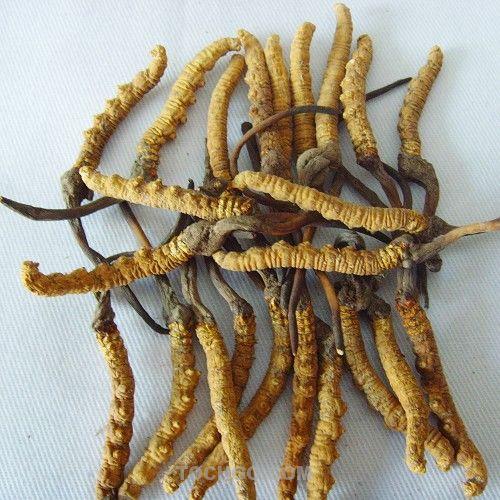 冬虫夏草的功效是什么?