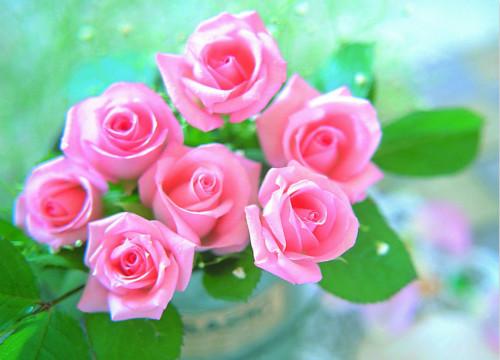 不同颜色玫瑰花的花语,你都了解么?