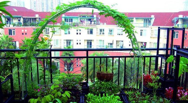阳台上种蔬菜怎么样?