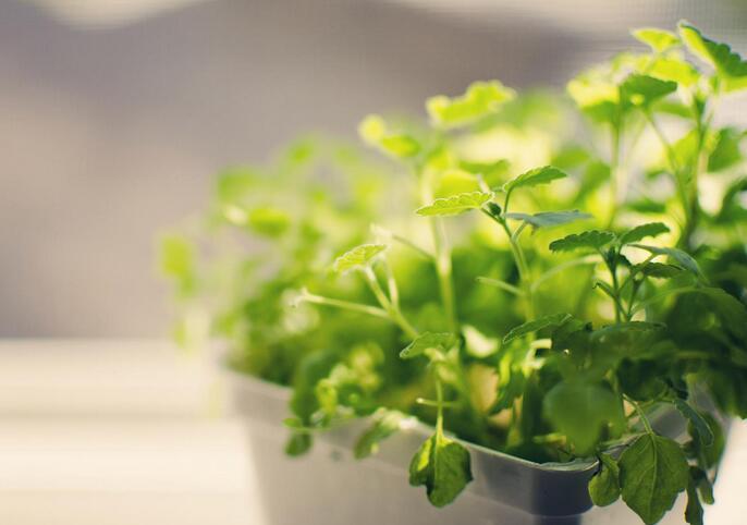 办公室里面适合放什么植物?