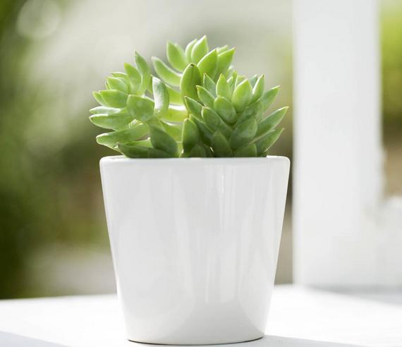 窗台边适合放什么植物?