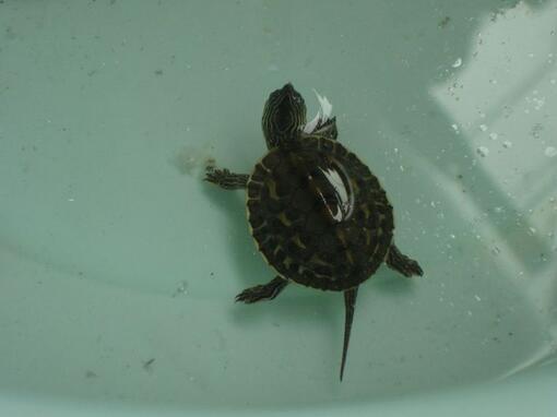乌龟吃什么食物才能长大?