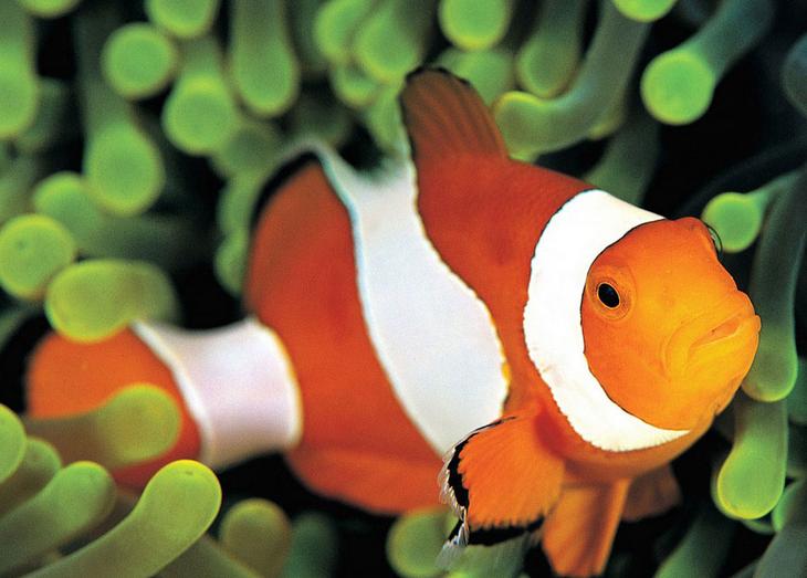 小丑鱼价格贵吗?