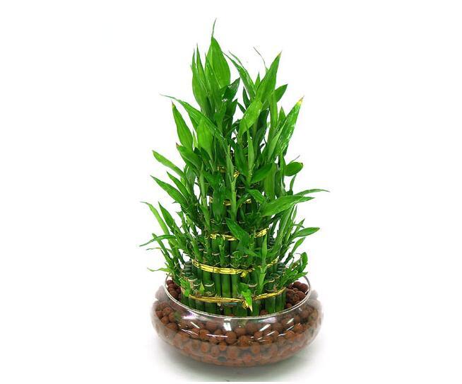 富贵竹多少根才比较招财?