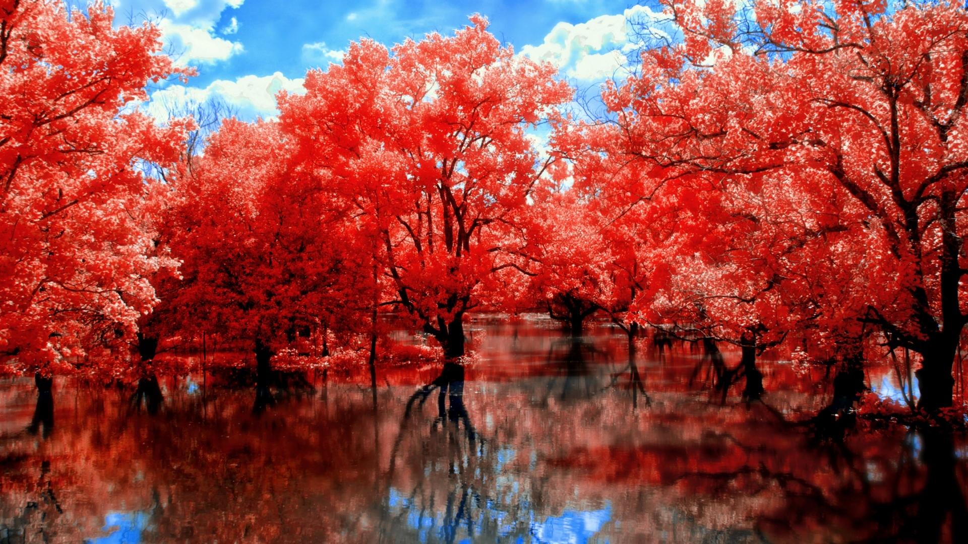 红枫树的叶子大概是什么时候开始变黄呢?