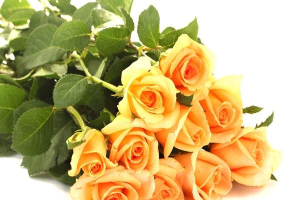 网上买花可行吗?