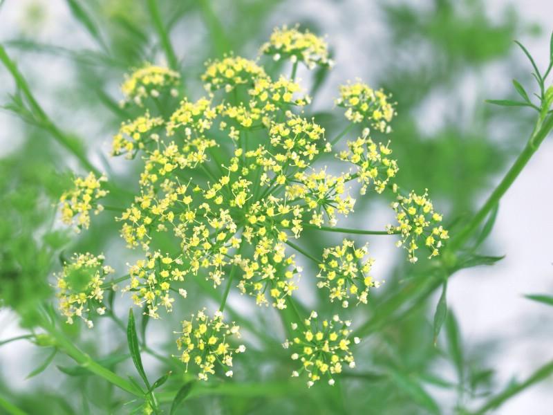 四季常开的草本植物有哪些?