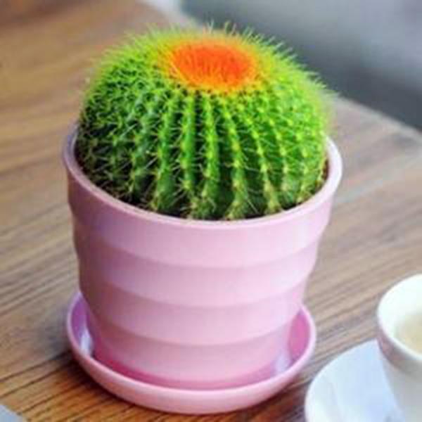防辐射植物排名
