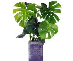 除甲醛十大排名植物