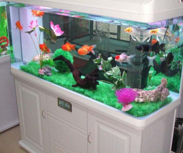 佳寶水族箱怎么樣 佳寶成品魚缸過濾改造 佳寶水族箱安裝圖解法