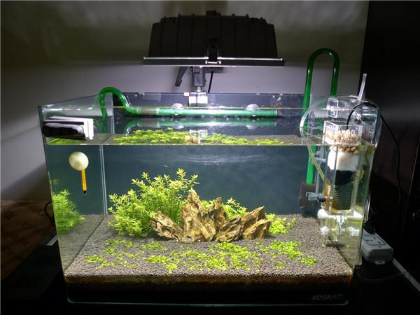 怎么自制鱼缸过滤器 鱼缸过滤器制作方法 鱼缸过滤器制作教程