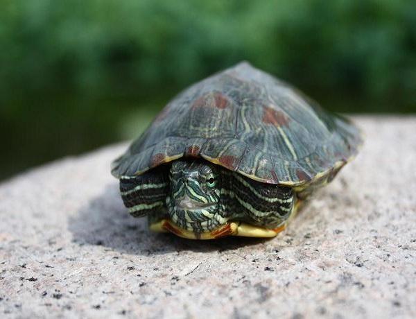 龟智商排名