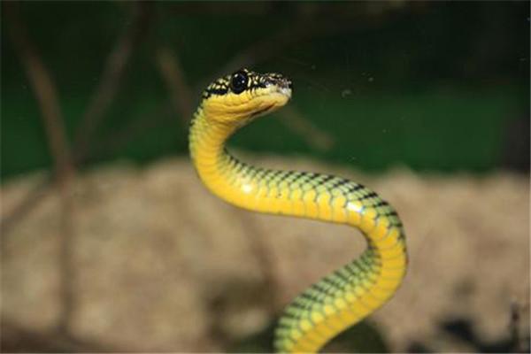 夢到蛇預示