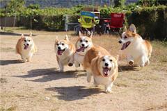 梦见一群狗