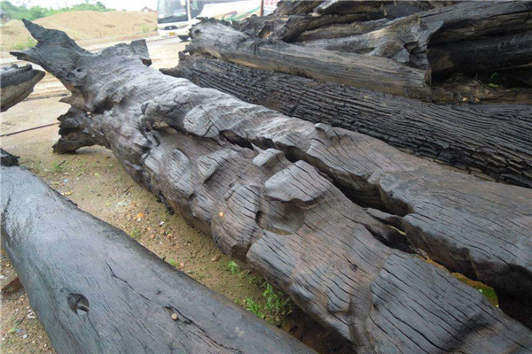 阴沉木是什么木头 阴沉木和乌木的区别是什么 阴沉木如何鉴定