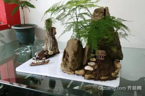 文竹盆景观赏图-精心制作文竹盆景 点亮家居生活图片