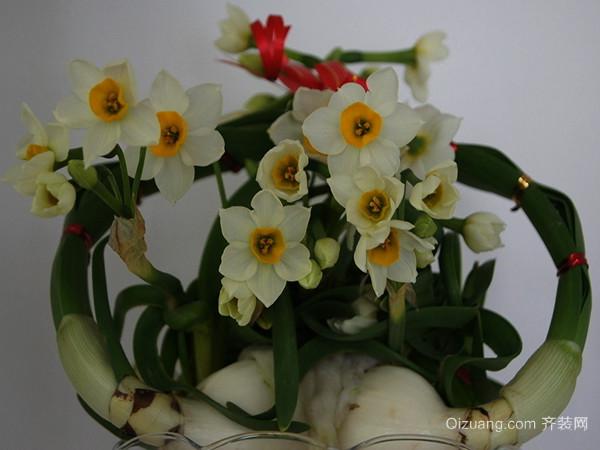 水仙花的养殖方法 水仙花图片观赏