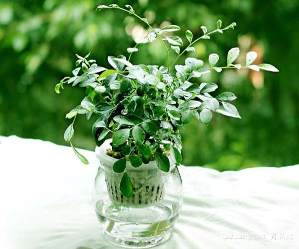 彩铅花卉步骤图片