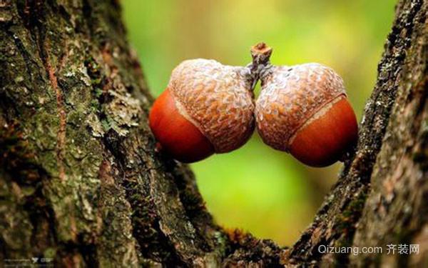 橡树的作用是什么