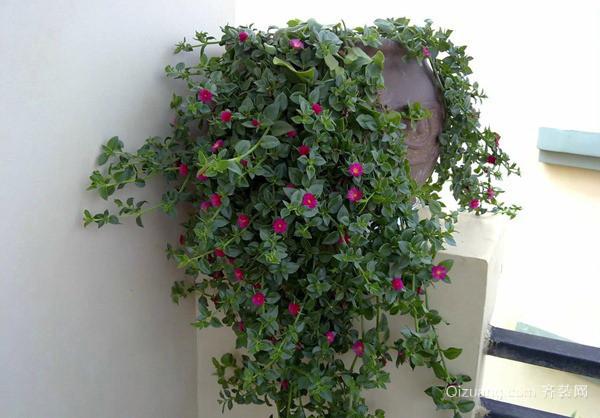 夏季养花要怎么做