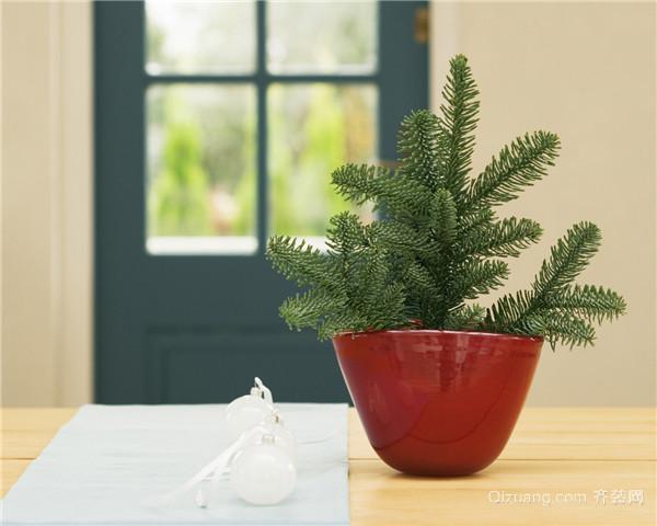 盆栽植物有哪些养护技巧