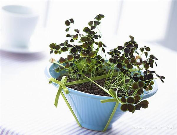 室内盆栽植物养护技巧