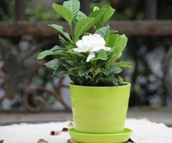 花卉养殖技巧有哪些