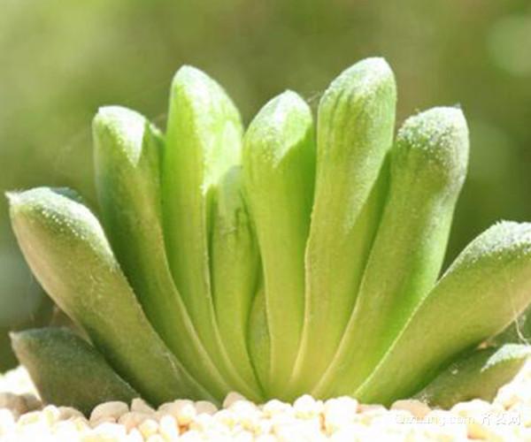 花卉养殖注意事项